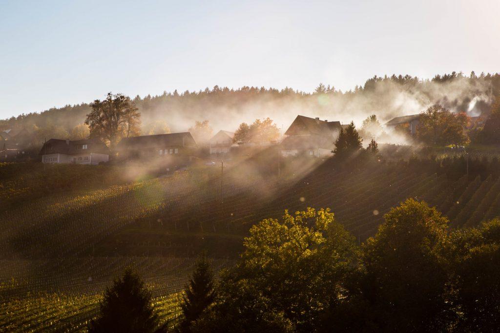 wunderschöne Weinberge der Weststeiermark im Herbst mit Nebelschwaden der Maronibrater